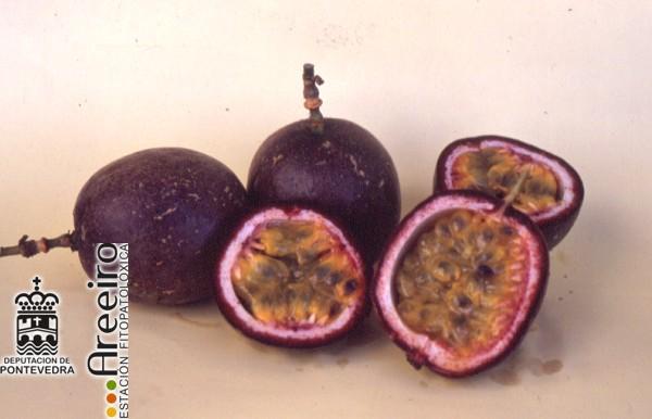 Maracuya (Passiflora edulis) - Interior y exterior del fruto.jpg