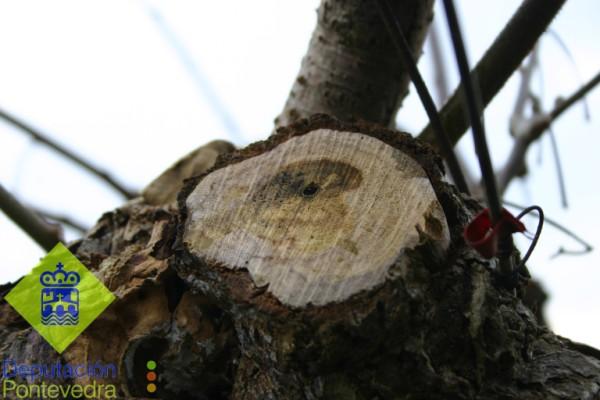 Enfermedades madera - Detalle sintomas.jpg