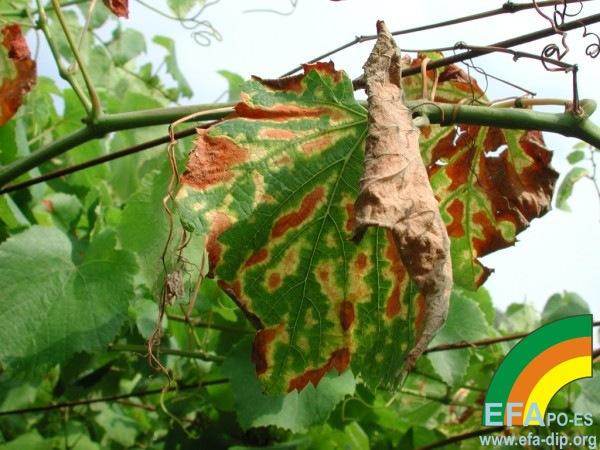 Síntomas en vegetación_2.jpg