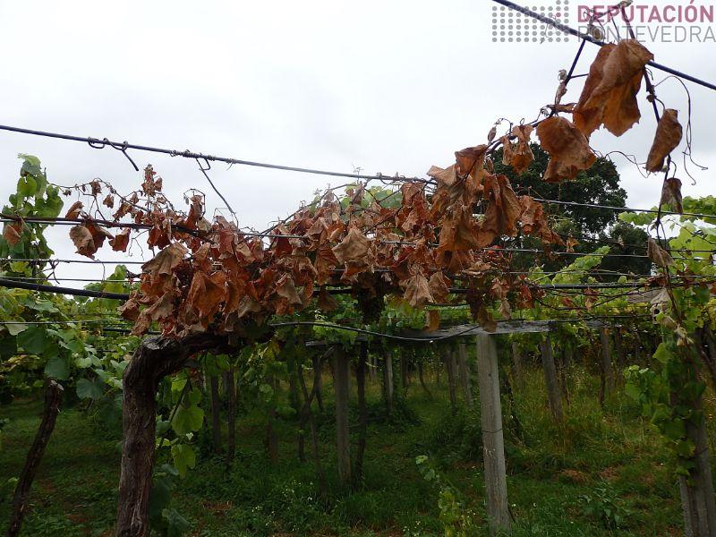 É bo eliminar xa as plantas mortas por alteracions de madeira